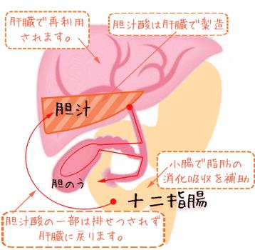 胆汁の再利用