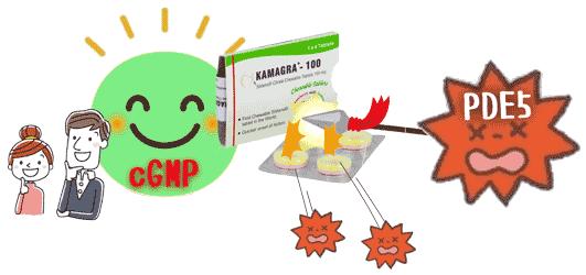PDE5の活動を抑制し、勃起を促すcGMPの活動を促す。