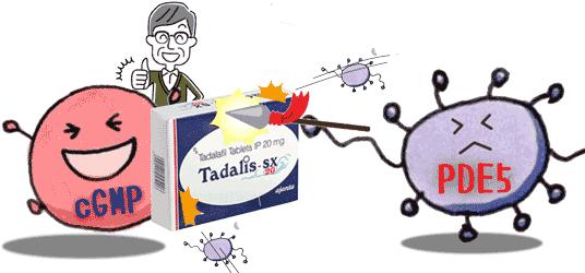 タダリス36時間PDE5を抑制